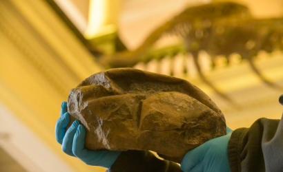 Paleotólogos chilenos descubren rarísimo huevo fosilizado de la era de los dinosaurios, un estudio publicado en la revista Nature