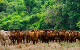 El Amazonas ya emite más dióxido de carbono a la atmósfera de lo que absorbe