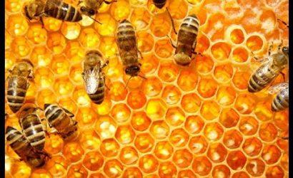 Estudio revela alarmante disminución de la producción de miel ante efectos del cambio climático